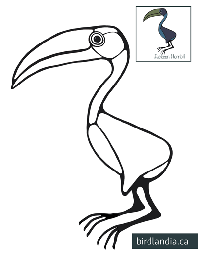 Jackson-Hornbill-Colouring Page thumb
